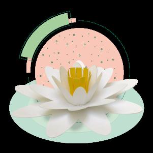 Flor de Irupé